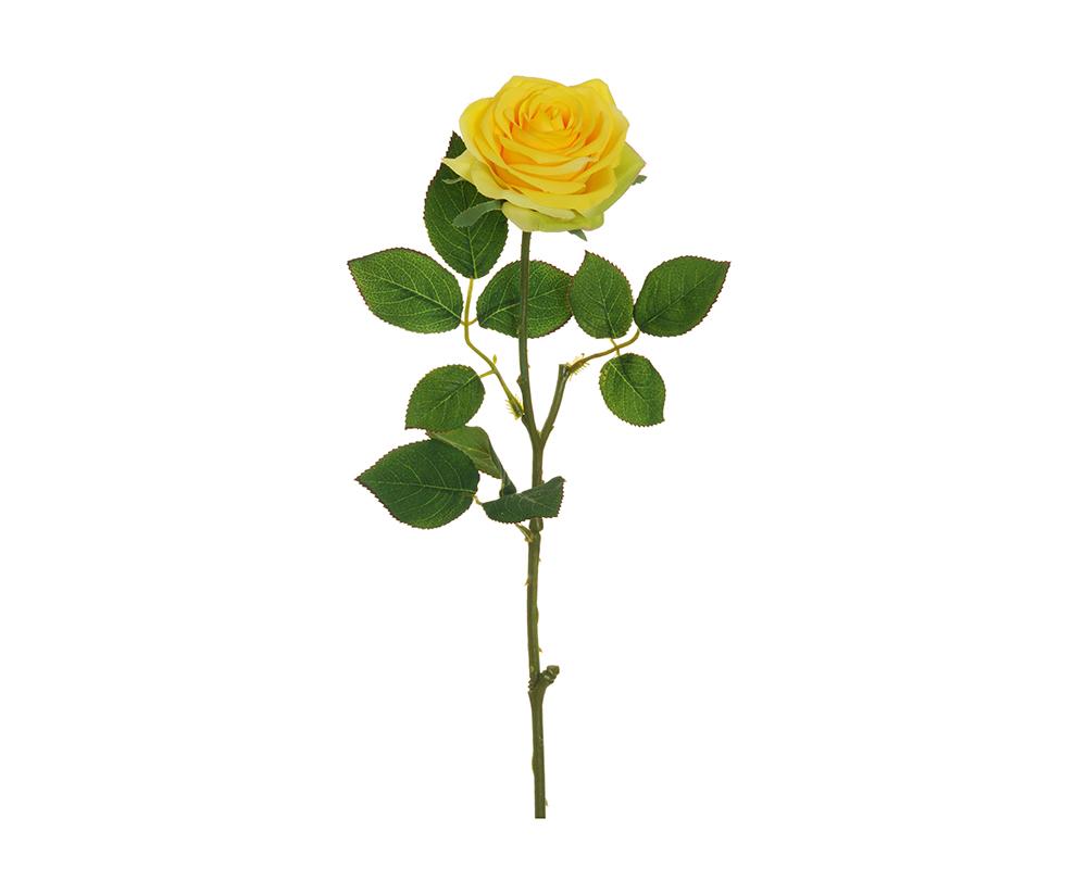Rosa Ecuador Alta 65 Cm Gialla