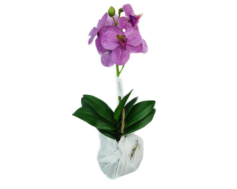 Orchidea Con Muschio Piccola 45 Cm Da Appendere Decorazione Fiori Artificiali