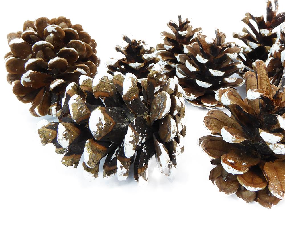 Pigne Silvestri Punte Bianche Gr 500 Naturali Decorazione Arredo Legno