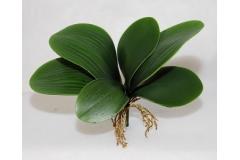 Foglie Di Orchidea Sagomabili Con Radici Fiori