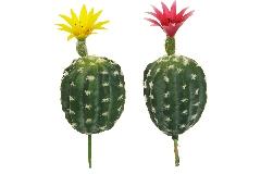 Cactus Ovale Con Fiore 2 Pezzi 2 Colorazioni