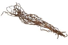 Rami Kiwi Legno Naturale Mazzo Marrone 70 Cm Circa Decorazione Arredo
